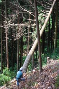 伐採風景2